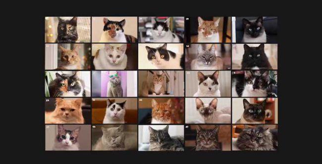 הכי מוצלח עד עכשיו: זום החתולים של מרצ. צפו