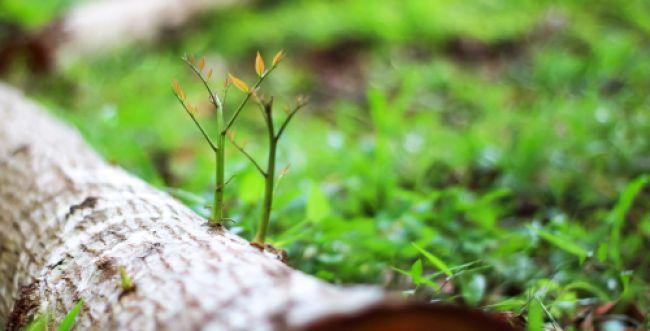 איך מובילים את חיינו לחידוש תמידי?