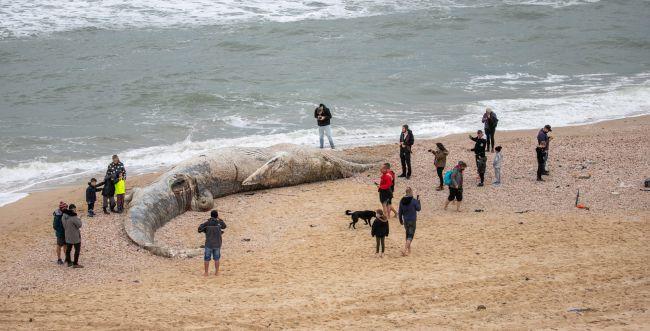 זיהום נרחב בחופים; מחר- פתיחת המשק | סיכום שבת