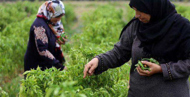 קמפיין חדש קורא: לא לקנות סחורה מחקלאים ערבים