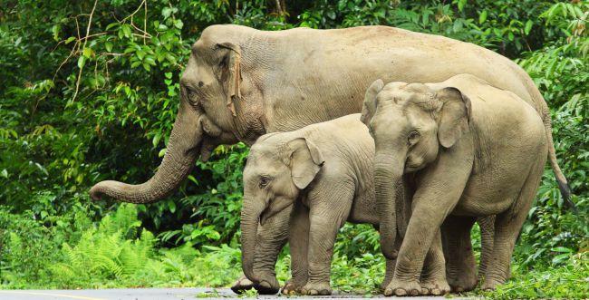 עדר פילים חדר לעיר בסין, התושבים הסתגרו בביתם