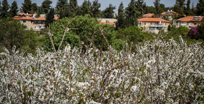 מגרעון לצמיחה: מועצת גוש עציון הצליחה בתהליך ההתייעלות