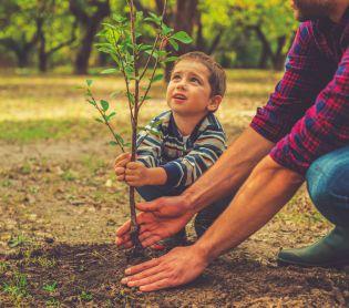הלכה ומנהג, יהדות שימו לב: היום האחרון לטעת עצים לפני השמיטה