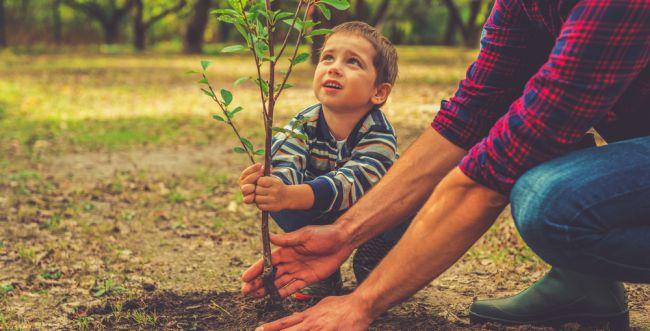 שימו לב: היום האחרון לטעת עצים לפני השמיטה