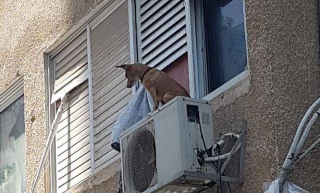 צעיר התעלל בכלב וקשר אותו על מזגן מחוץ לחלון