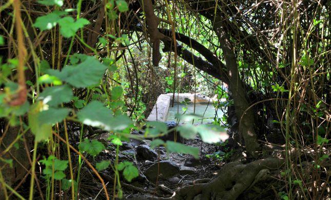 מושלם לקיץ: 4 מעיינות צוננים ברמת הגולן