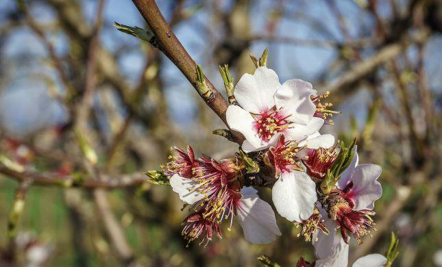 אזעקת טרנד ברוח הקייצית: פרחים