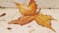 """מבזקים, מוזיקה, תרבות """"בכל זאת זה צובט בלב"""": שירי הסתיו המרגשים ביותר"""