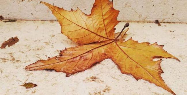 """""""בכל זאת זה צובט בלב"""": שירי הסתיו המרגשים ביותר"""